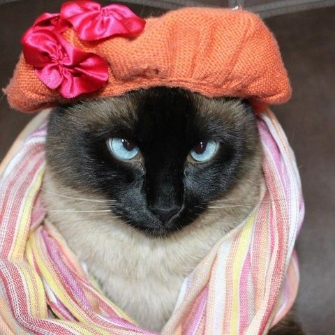 Image result for cats wearing spring clothes