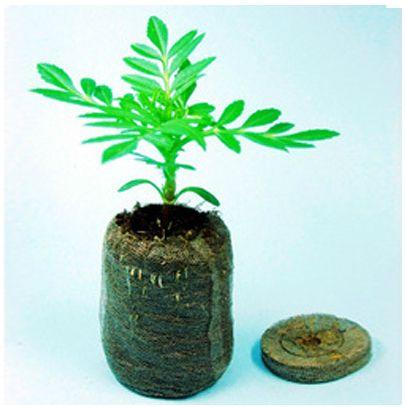 50 Count 38mm Jiffy Peat Pellets Seeds Starting Plugs Nursery seed tray Pots Flower Pots Planters Seedlings Early Soil