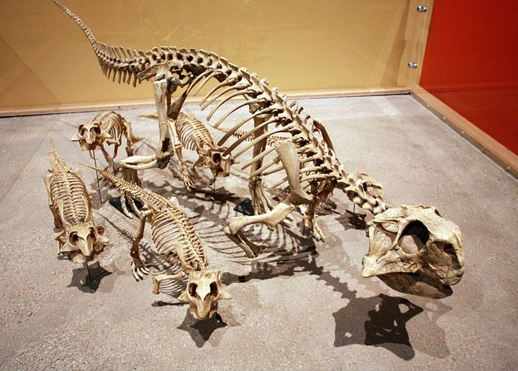 archaeologists, anthropologists, and paleontologists essay Read the rise of prehistory,  french,german,english,and american scholars--especially archaeologists, anthropologists,  anthropologists, paleontologists,.