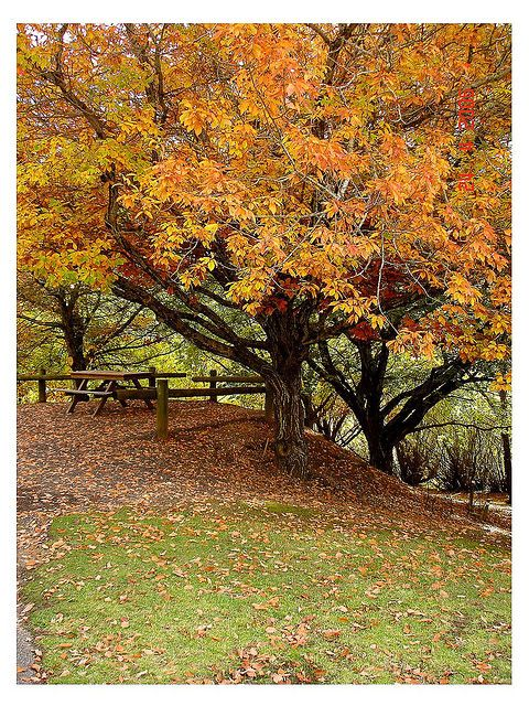 Autumn in Adelaide ~Mount Lofty Botanic Garden | Flickr - Photo Sharing!