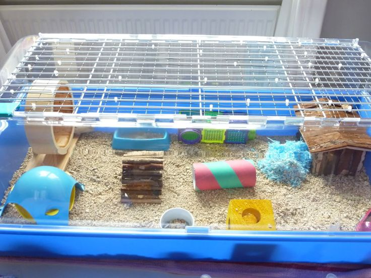 This is the best C&C cage alternative I have ever seen. Plenty of space and no bars for hedgies to climb.  Zoozone cage.