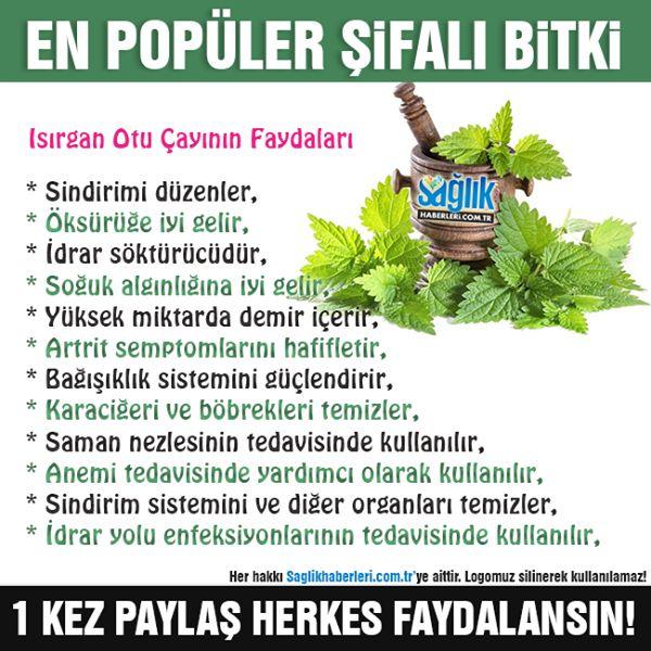 En popüler şifalı bitki; Isırgan otu