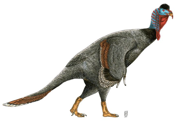 Graffam's Sloth Claw by Smnt2000 on DeviantArt  naturalistic restoration of the therizinosaurid Nothronychus graffami.