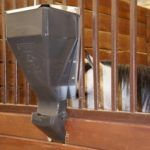 Feeding Frequency Affects Gastric Ulceration in Exercised Young Horses