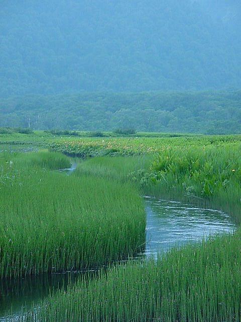 Creek, Oze, Gunma, Japan