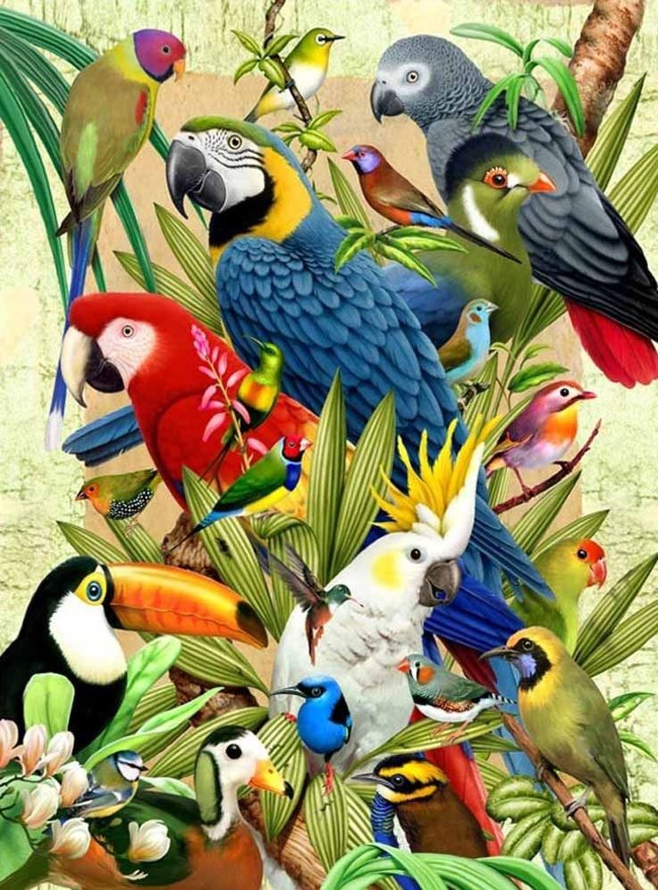 3d Lenticular Picture Exotic Birds Parrot Cockatoo Toucan