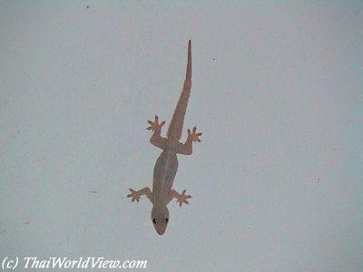 How do you kill house lizards?