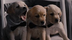Yawning is so contagious… cute gif