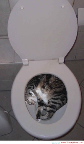 cool Funny cat – Humorous