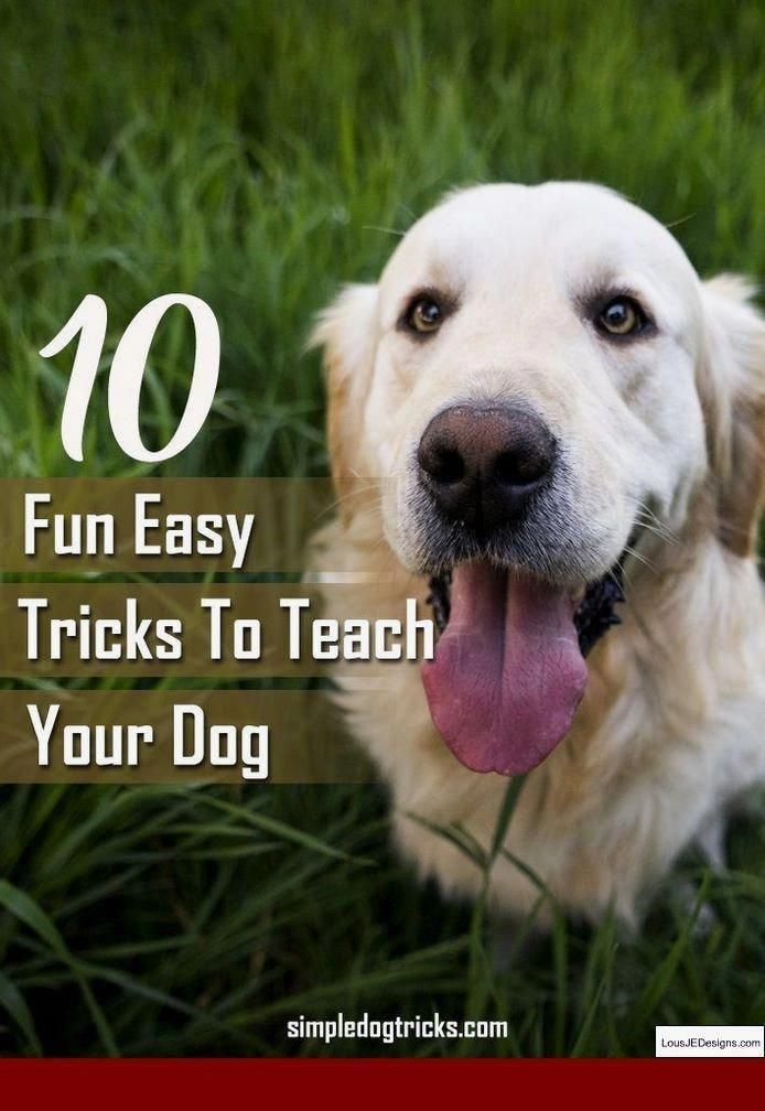 Tips For House Training A Dog And Pics Of How To Get A Puppy To