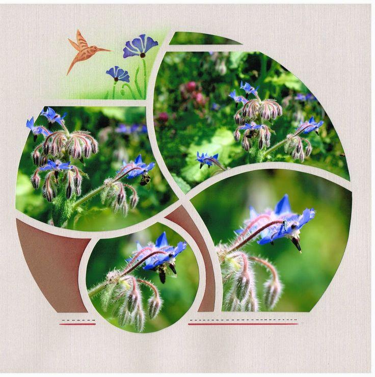 Scrap à Chambé: Fleurs de Bourrache