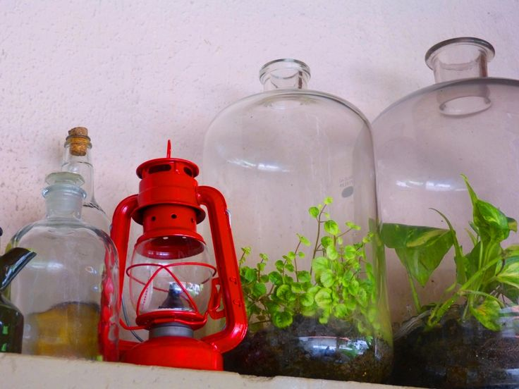 Terrarium in old lab bottles  Plantas na garrafa