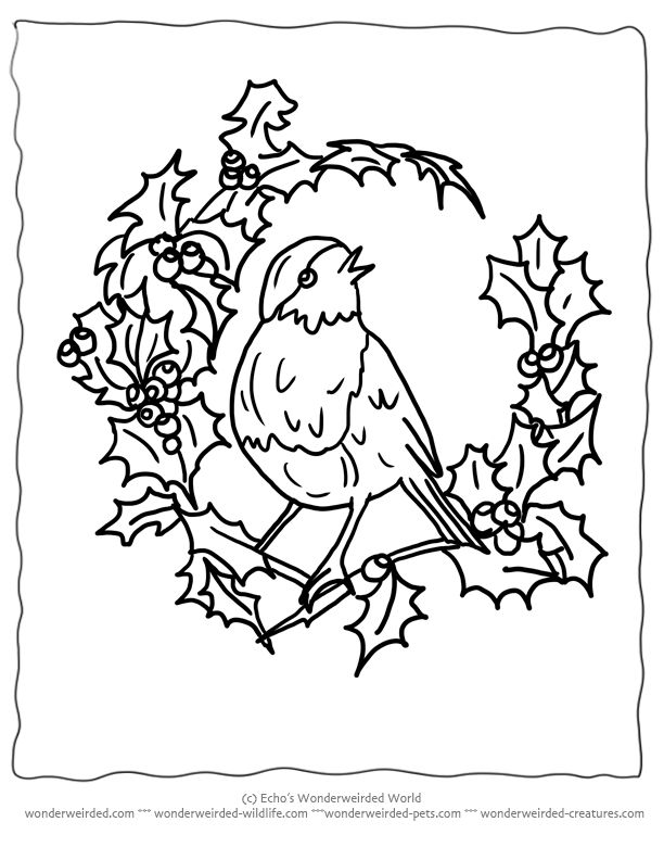 Free Printable Christmas Coloring Pages Birds , Echo's Christmas Birds at wonderweirded-wildlife.com