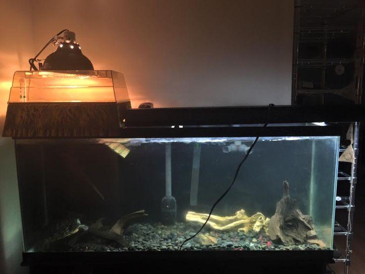 180 Gallon Aquarium Upgrade - 3D Background!