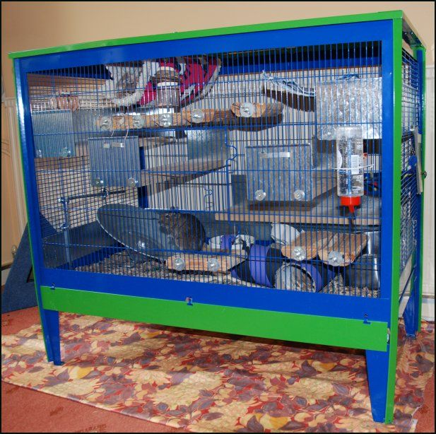 104 best images about degus on pinterest hamsters rat cage and guinea pigs. Black Bedroom Furniture Sets. Home Design Ideas