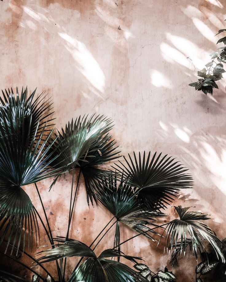 textured pink walls and palm trees