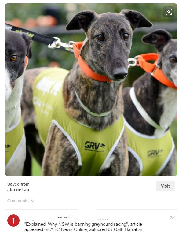 Protecting our Greyhounds