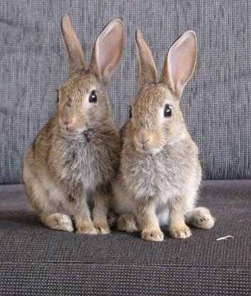 Rescued wild rabbits