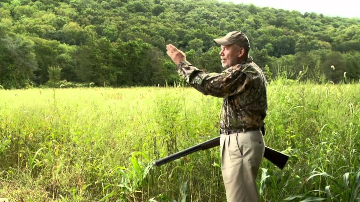 Dove Season Pointers and a Cooking Tip - Bird Hunting Tip
