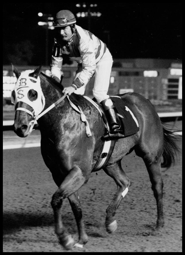 1000+ Images About Hall Of Fame Horses On Pinterest