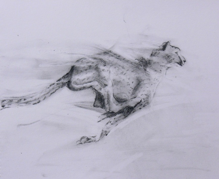 Line Art Effect Photo : 10 best animal sketches images on pinterest