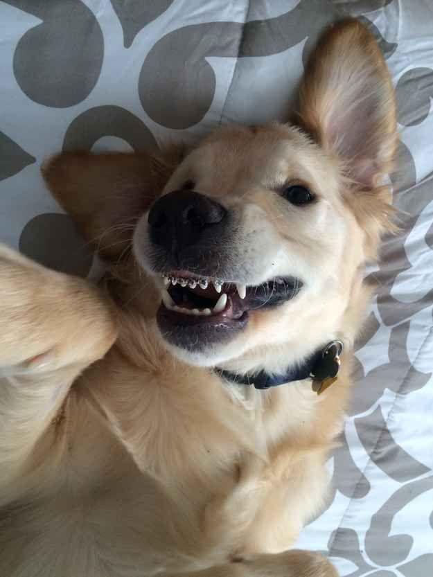 Aquí está el resultado final, con Wesley exhibiendo su adorablemente tierna y poco común sonrisa con frenos.