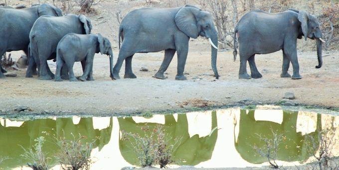 """Photo """"ElephantsHwangeGameReserve,Zimbabwe"""" by maryannwest"""