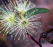 View of the Eucalyptus-Saregenti plant