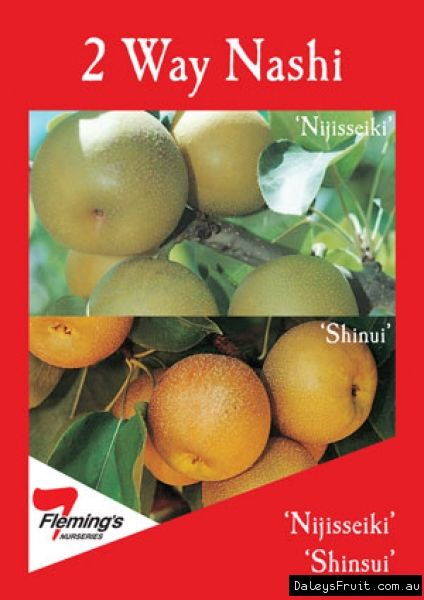 Nashi 2 way Nijisseiki and shinsui