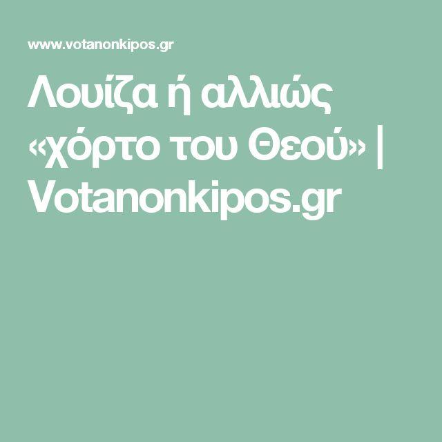 Λουίζα ή αλλιώς «χόρτο του Θεού»   Votanonkipos.gr