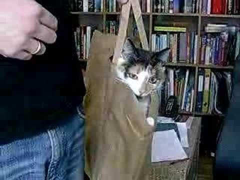my cat in a bag