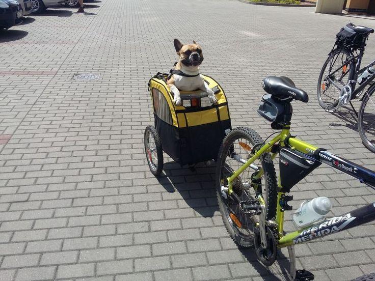 Remolque para perros Mini Bee