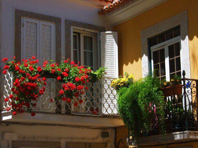 Les 25 meilleures id es concernant plantes retombantes sur pinterest plante grimpante fleur for Quelles plantes pour balcon