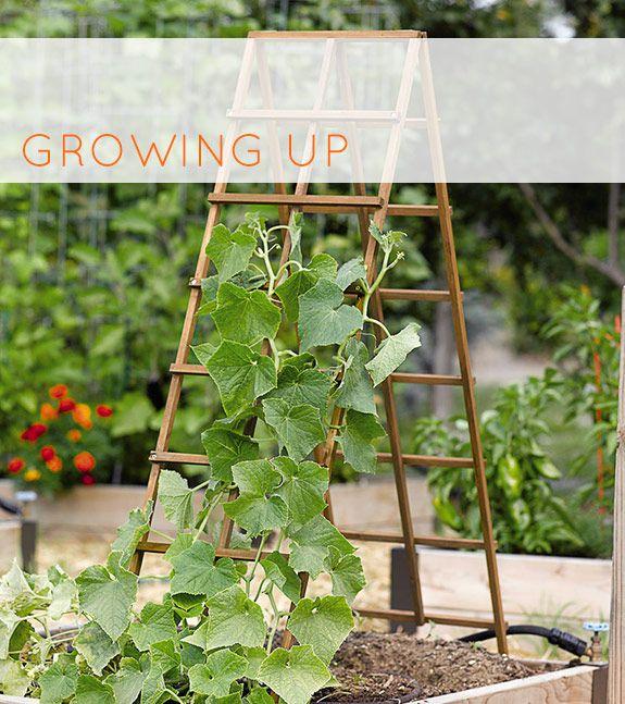 trellis gardening
