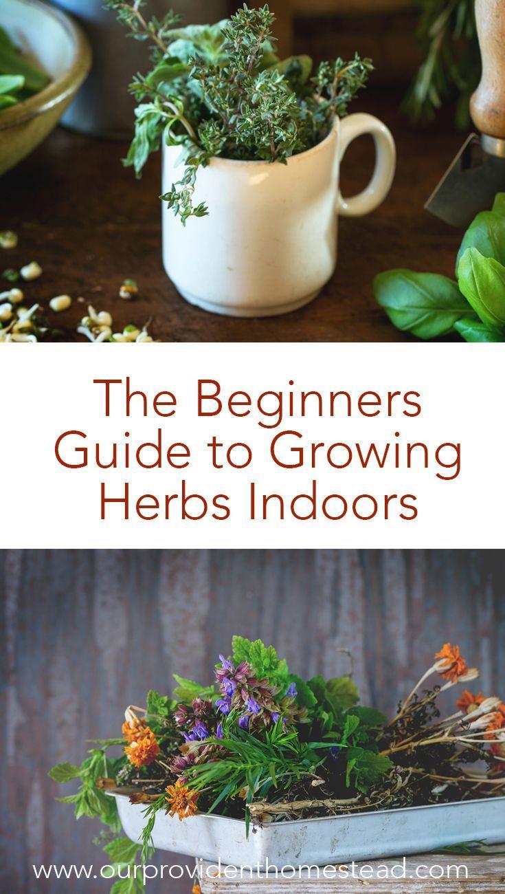 Growing Herbs Indoors The Beginner S Guide Growing Herbs