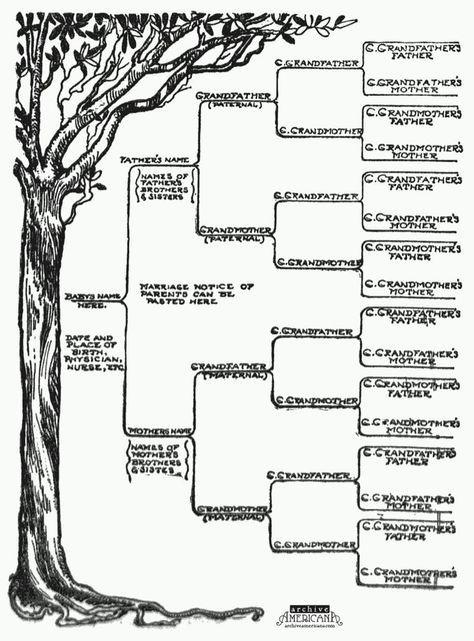free family tree template printable foe word   family tree template printable winter league baseball venezuela family ...: