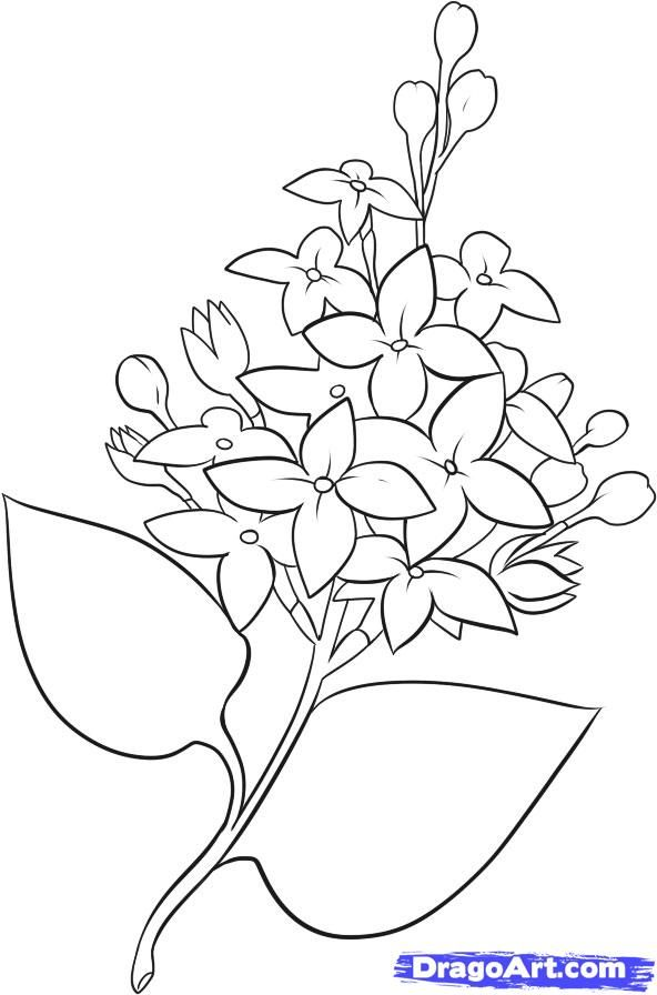how to draw lilacs