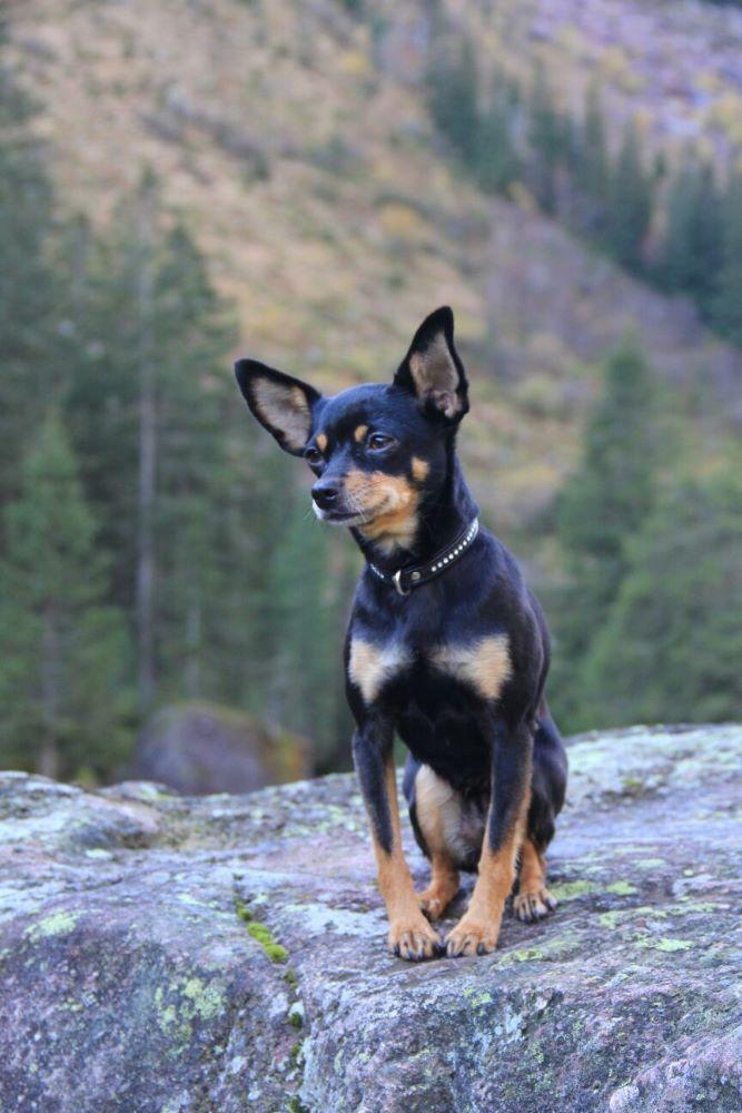 Tier Kleinanzeigen Com Nbspthis Website Is For Sale Nbsptier Kleinanzeigen Resources And Information Terrier Tiere Tiere Und Heimtierbedarf
