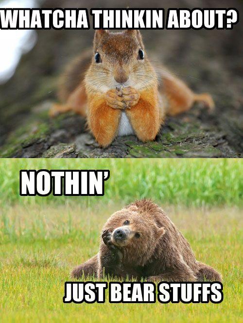 animals: Animal Humor, Deep Thoughts, Woodland Creatures, Baby Animal, Bears Stuff, Funny Animal, Silly Animal, So Funny, Animal Funny