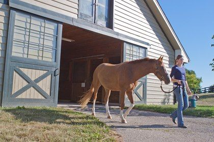 How Much Does a Horse Cost? - TheHorse.com | Initial purchase price is usually the more affordable aspect of horse ownership; feed, stabling, health care, and equipment costs add up. #horses #horseownership