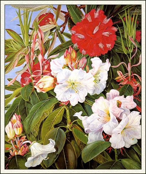 Marianne North. Kew Gardens