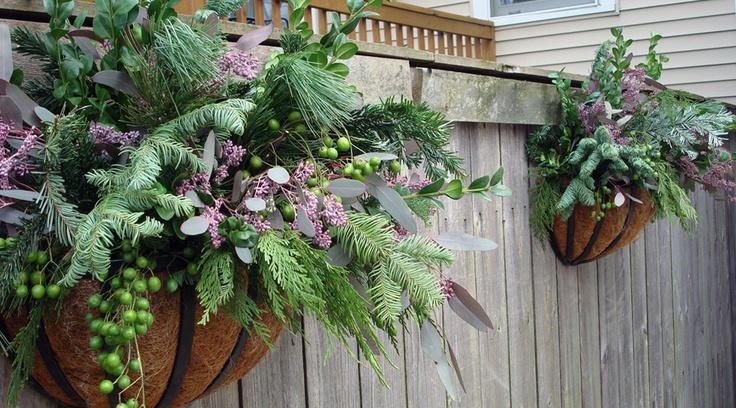 Winter Hanging Baskets