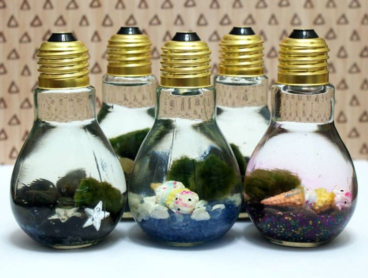 Marimo Moss Ball DIY Light Bulb Aquarium