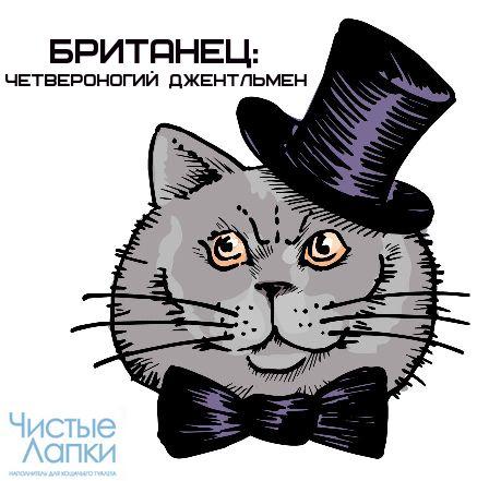 Британец: четвероногий джентльмен  Кошки британской породы пользуются огромной популярностью не только в России, но и в мире. Удивительно красивые, грациозные, умные и воспитанные — настоящие джентльмены — они с первого взгляда завоёвывают нашу любовь. Сегодня «Чистые лапки» решили рассказать немного об этой уникальной породе.  http://www.chistye-lapki.ru/lapinform/article/detail.php?ELEMENT_ID=4258