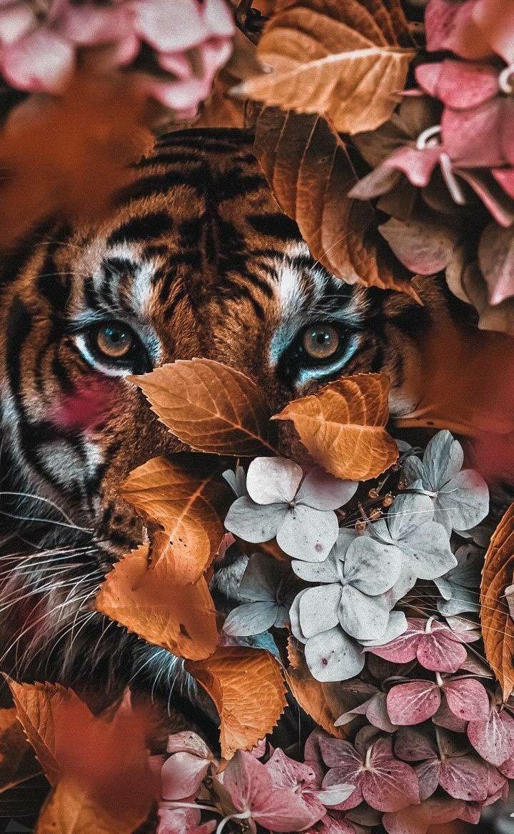 48213415 Posters En Wanddecoratie Voor Jouw Interieur Posterjunkie In 2020 Dieren Mooi Botanisch Animal Wallpaper Most Beautiful Animals Animals Beautiful
