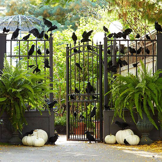 Spook your Halloween guests with a raven covered entry! More Halloween decorations: http://www.bhg.com/halloween/outdoor-decorations/halloween-outdoor-makeover/?socsrc=bhgpin091713ravens