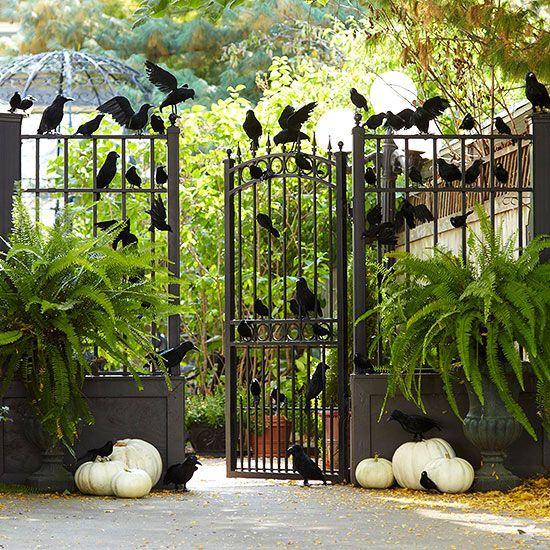 black birds & ghost pumpkins make an eerie entrance for Halloween