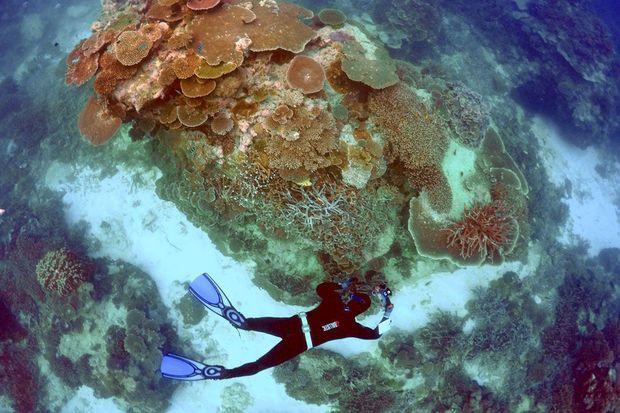 Australie: le blanchissement des coraux de la Grande barrière alarme