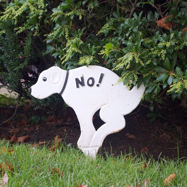 37 Best Images About Dog Poop Signs For Tristan On Pinterest