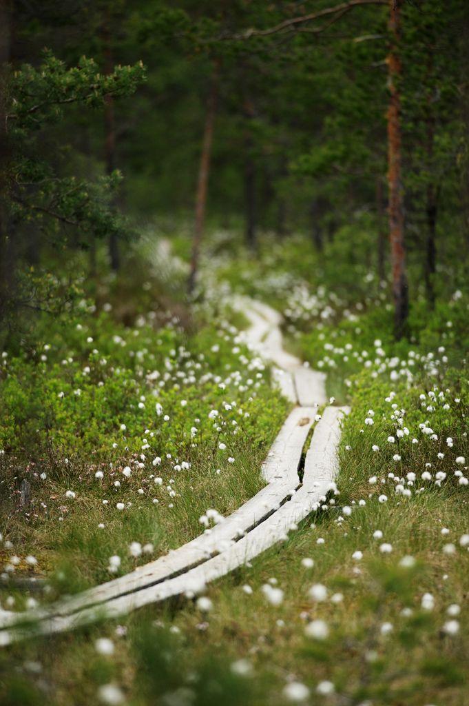 Finnish forest in Linnaistensuo, Lahti.